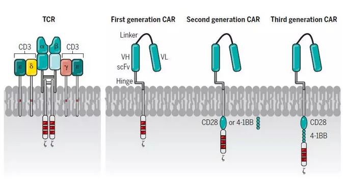 一文读懂 CAR-T 治疗以及最新进展
