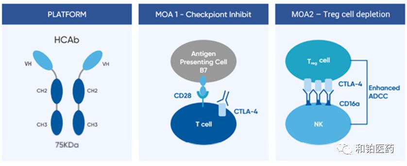 和铂医药新一代抗CTLA-4抗体I期临床试验展现治疗突破