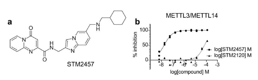 Nature:癌症治疗新时代!m6A甲基化酶METTL3抑制剂,有效抑制白血病进展