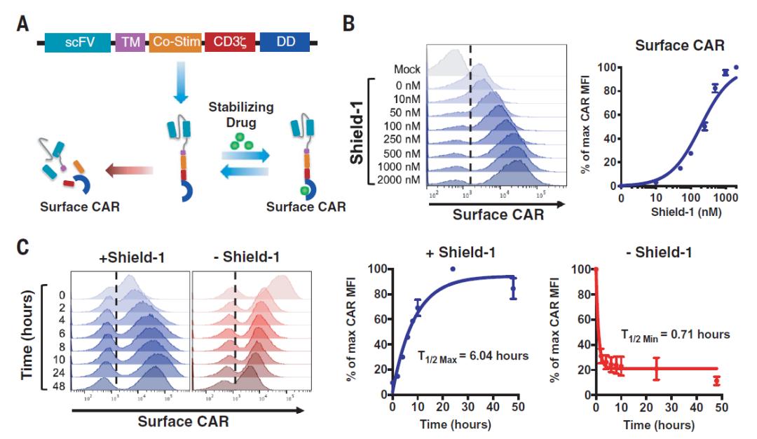 """Science:T细胞也是""""打工人"""",让它们休息一下,能够重振活力,实现更好的抗癌效果"""
