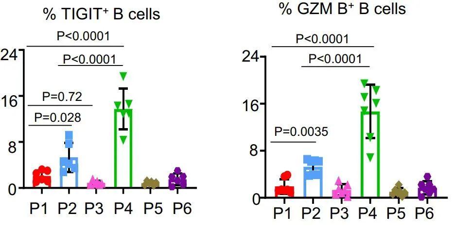 TIGIT+记忆B细胞在免疫调节中的作用