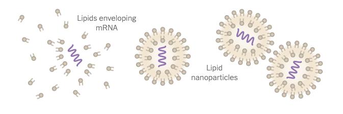 收藏 | 拯救了美国的mRNA疫苗,制造过程首次揭秘