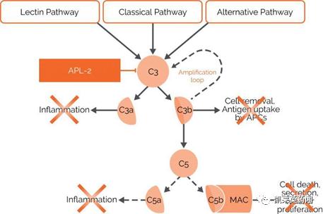 聚焦药靶:从罕见病到新冠治疗,补体药物的研发之路