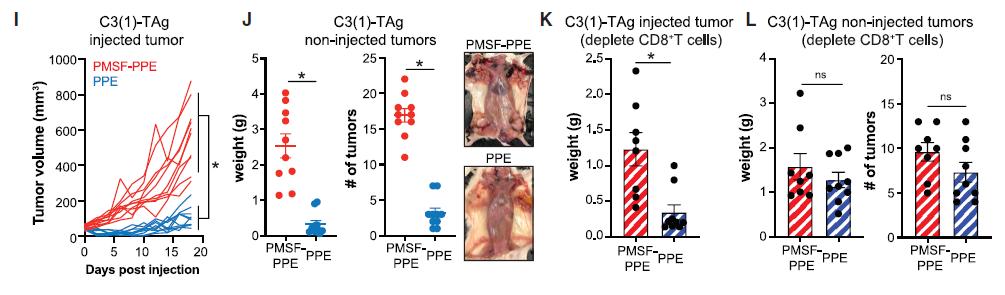 Cell重磅:广谱抗癌疗法或将诞生,中性粒细胞的这种蛋白酶能够杀死各种癌细胞,且不伤害正常细胞