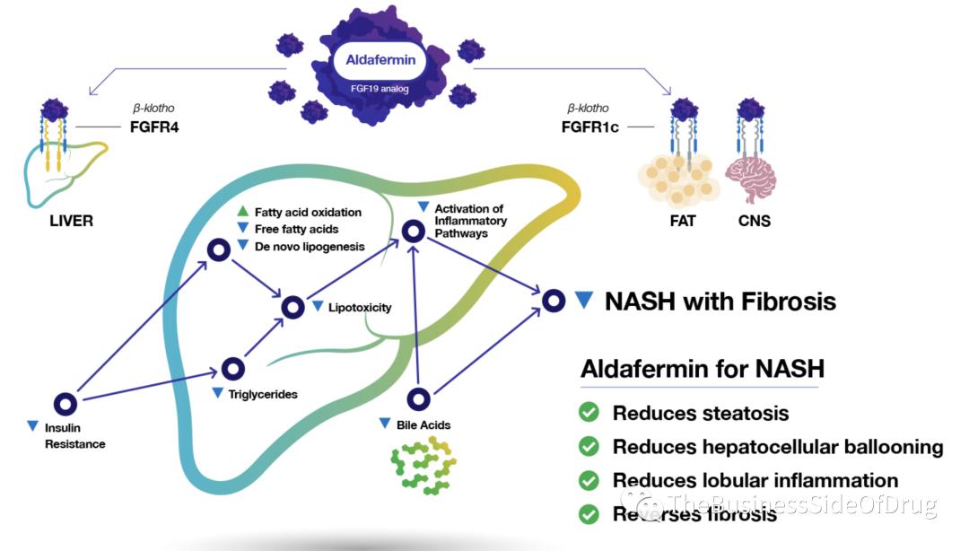 NASH update (May 24th): FGF19 Aldafermin Ph2b ALPINE2/3 data