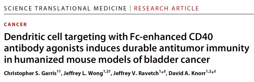 Science子刊:解决毒性问题,Fc优化的CD40激动性抗体可诱导持续性抗肿瘤反应
