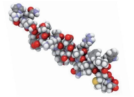多肽药物的现实发展与未来展望