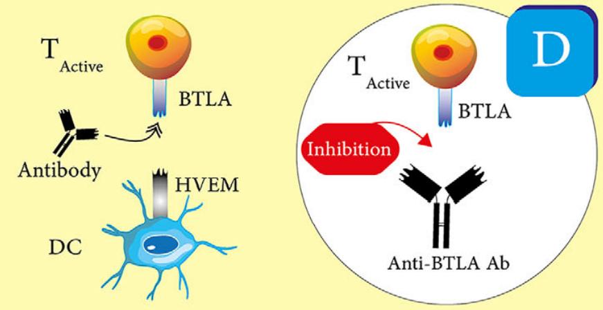 免疫检查点与自身免疫性疾病
