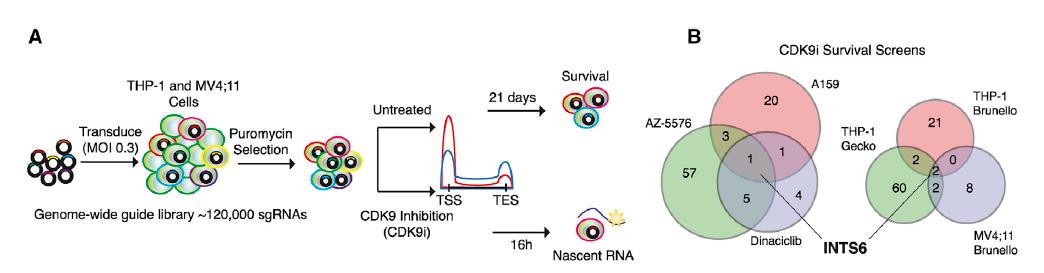 Cell:发现调控基因转录的新检查点,开辟癌症治疗新途径