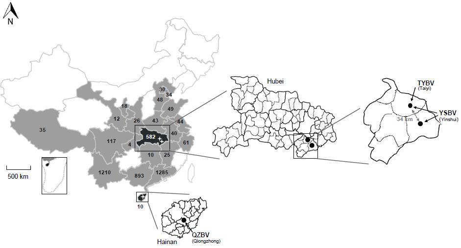 Viruses:石正丽课题组在中国蝙蝠种群中发现新型弹状病毒