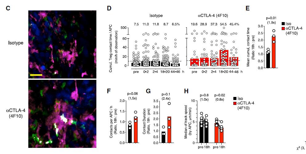 Cell重磅发现:肿瘤免疫疗法会自我限制其疗效,通过激活Treg细胞,降低免疫治疗效果