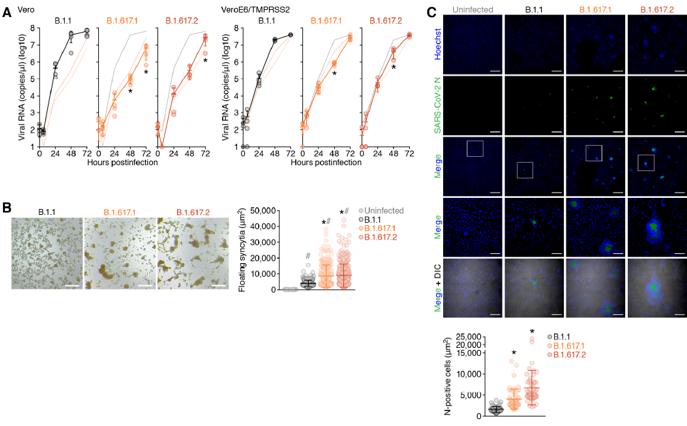 重磅:新冠变异株(Delta 变体)全面研究,对中和抗体产生抗性