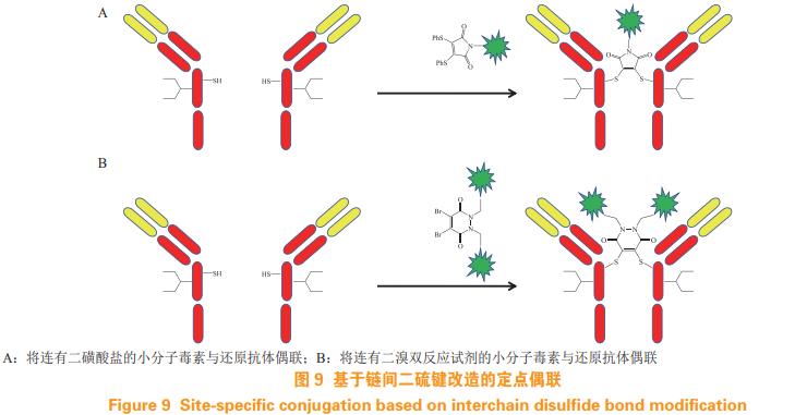 定点偶联技术在抗体药物偶联物中的应用