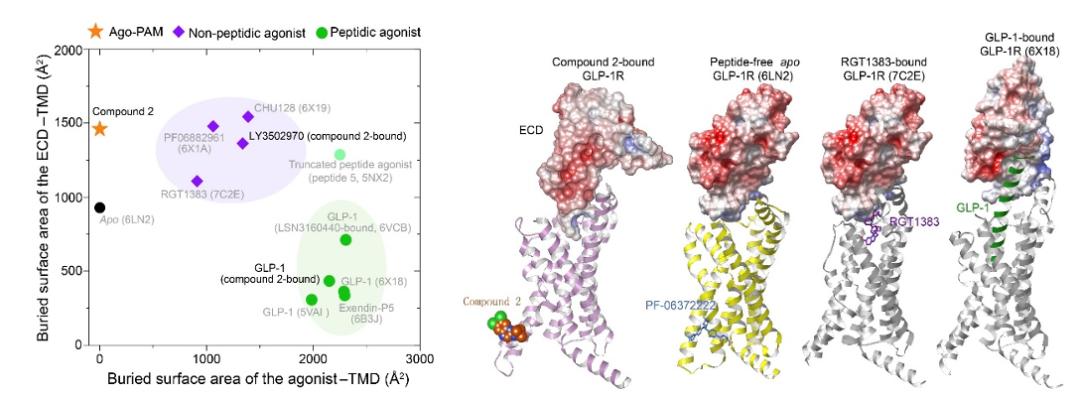 《自然•通讯》  我国科学家发现B1类G蛋白偶联受体变构激动调节的分子机制