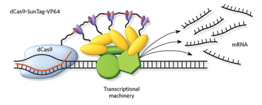 CRISPR 3.0 来了,一次激活多个基因表达,将在育种领域大显身手
