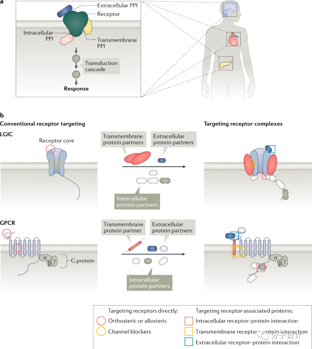 靶向蛋白复合体的药物研发机遇与挑战