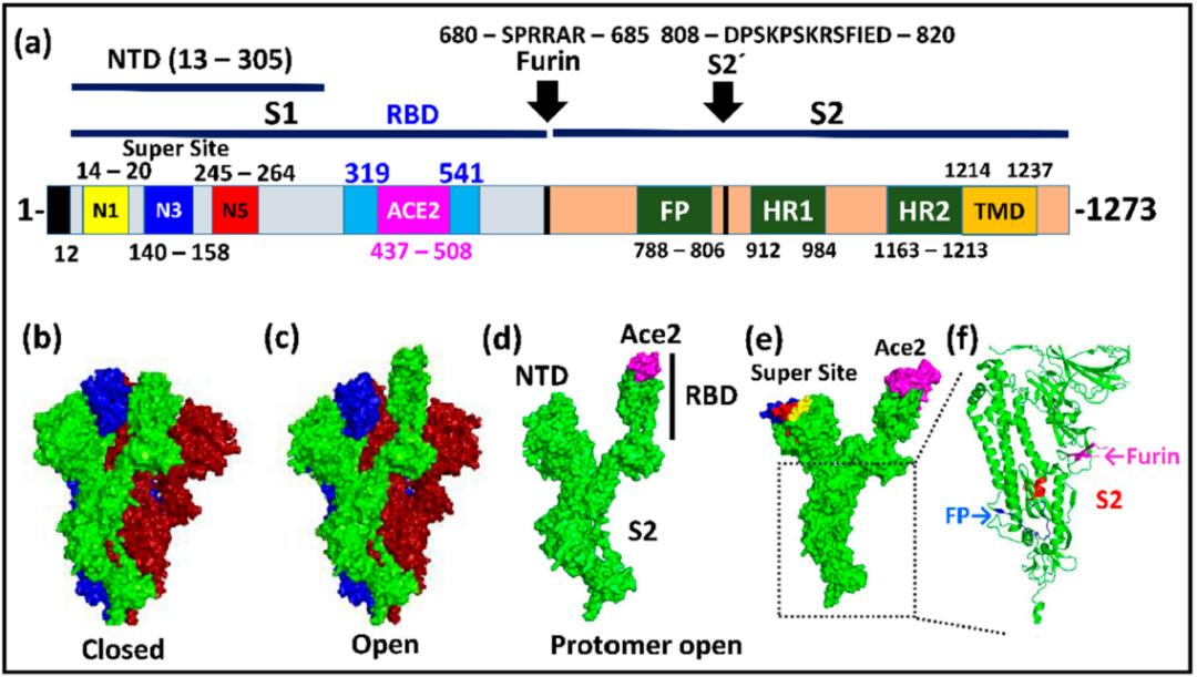 Viruses:揭开SARS-CoV-2刺突蛋白突变的神秘面纱