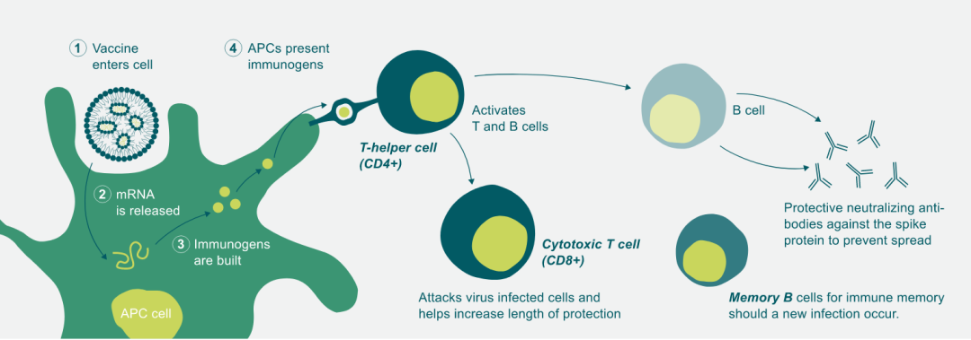 新冠疫情推动mRNA疫苗技术快速成熟,国内迅速布局,复星、君实…