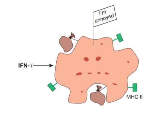 人人学懂免疫学:第五期(语音版)