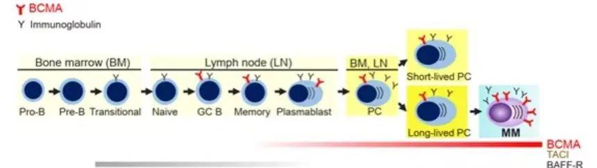 如何给CAR-T细胞选择好靶标?