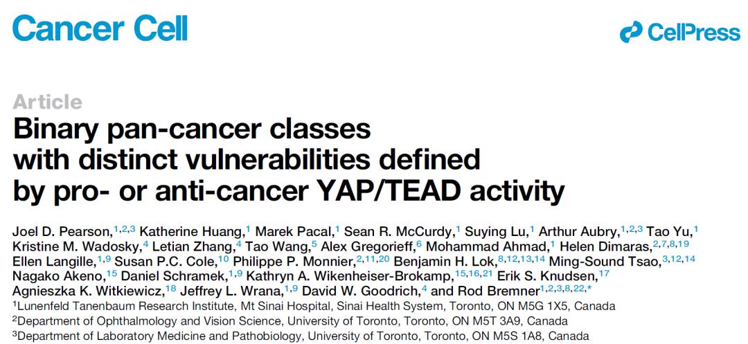 重磅发现:所有癌症类型可根据YAP蛋白表达与否,分为两类
