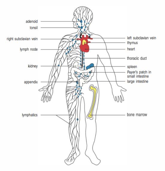 人人学懂免疫学:第一期(语音版)