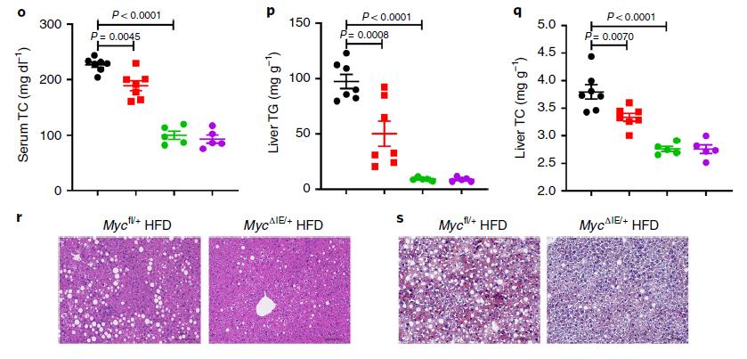 Nature子刊:同济大学刘维薇团队等发现肠道MYC是代谢性疾病的药物靶点