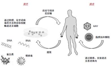 在基因治疗产品迅速发展的今天,质量控制如何做?