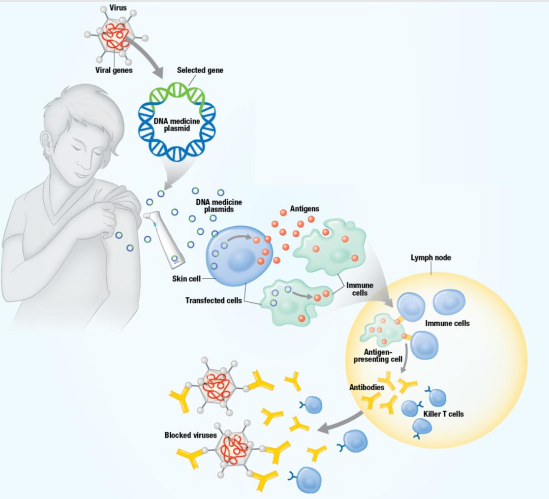 下一代抗体工艺:核酸+抗体