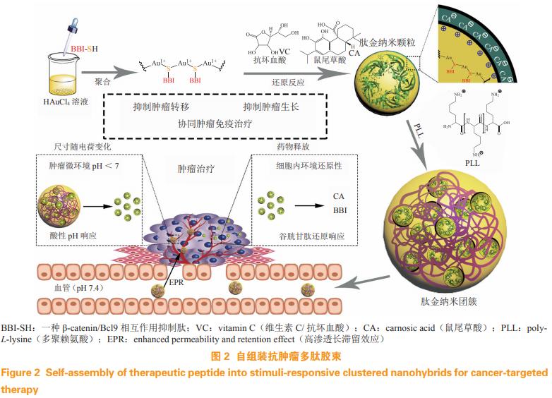 靶向蛋白-蛋白相互作用的抗肿瘤多肽药物的开发与递送