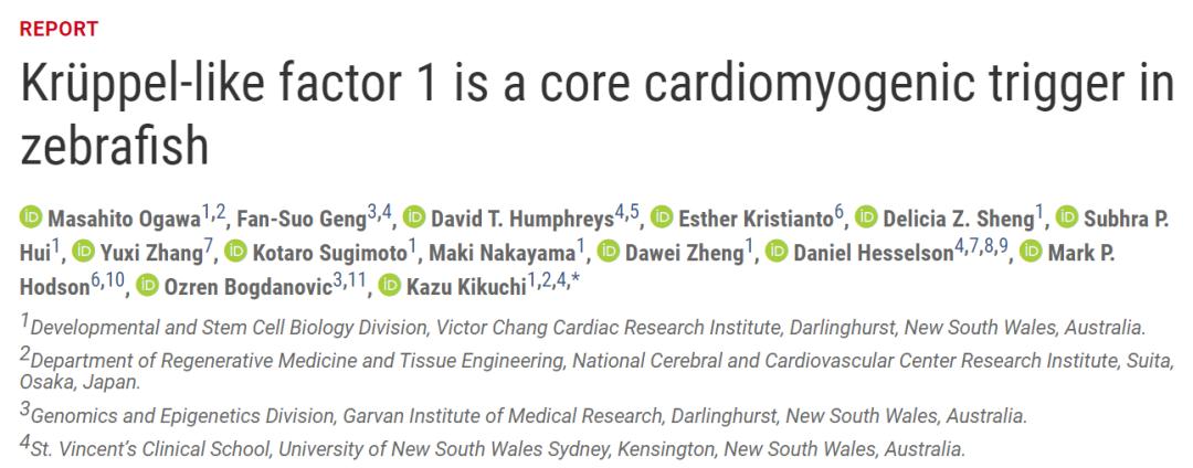 Science:从斑马鱼中发现的心脏再生开关,带来人类治愈心脏病之希望