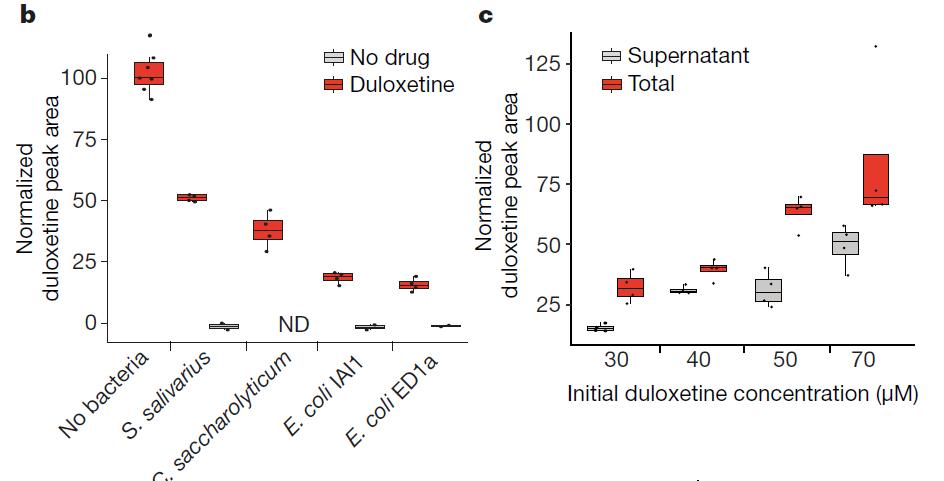 Nature重磅发现:吃下去的药被肠道细菌吸收了?可能会降低药效并改变肠道菌群