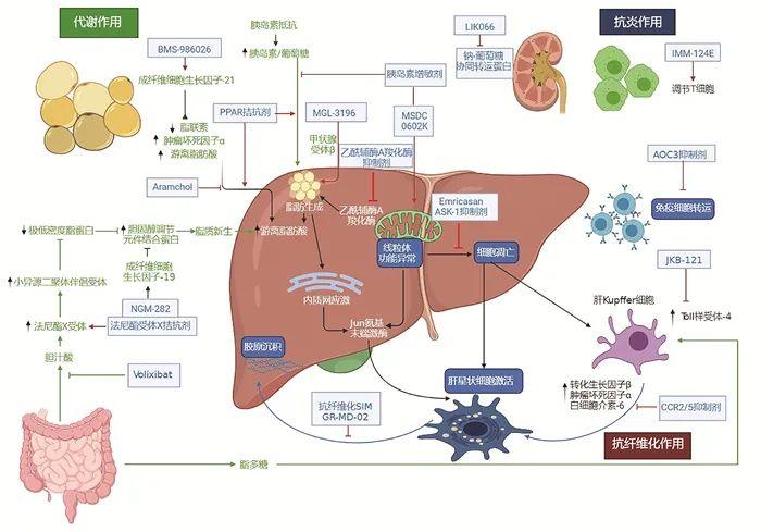 特别关注|非酒精性脂肪性肝炎(NASH)新药临床试验的难度与挑战