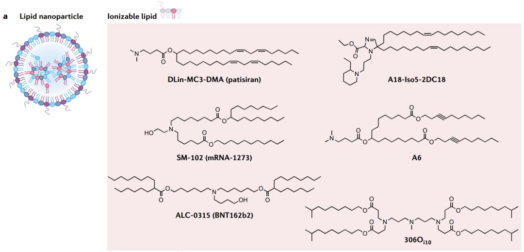 mRNA疫苗的设计和载体